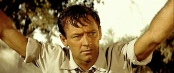 WILLIAM HOLDEN ( PICNIC )